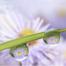 Flower Essence Society photo